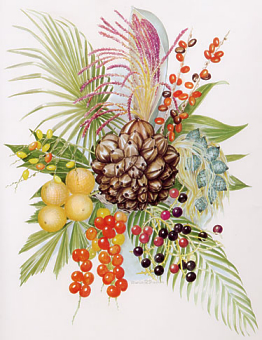 A drawing of palm fruits, leaves, and inflorescences by Marion Ruff Sheehan